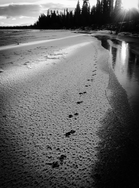 Tracks on the Tanana